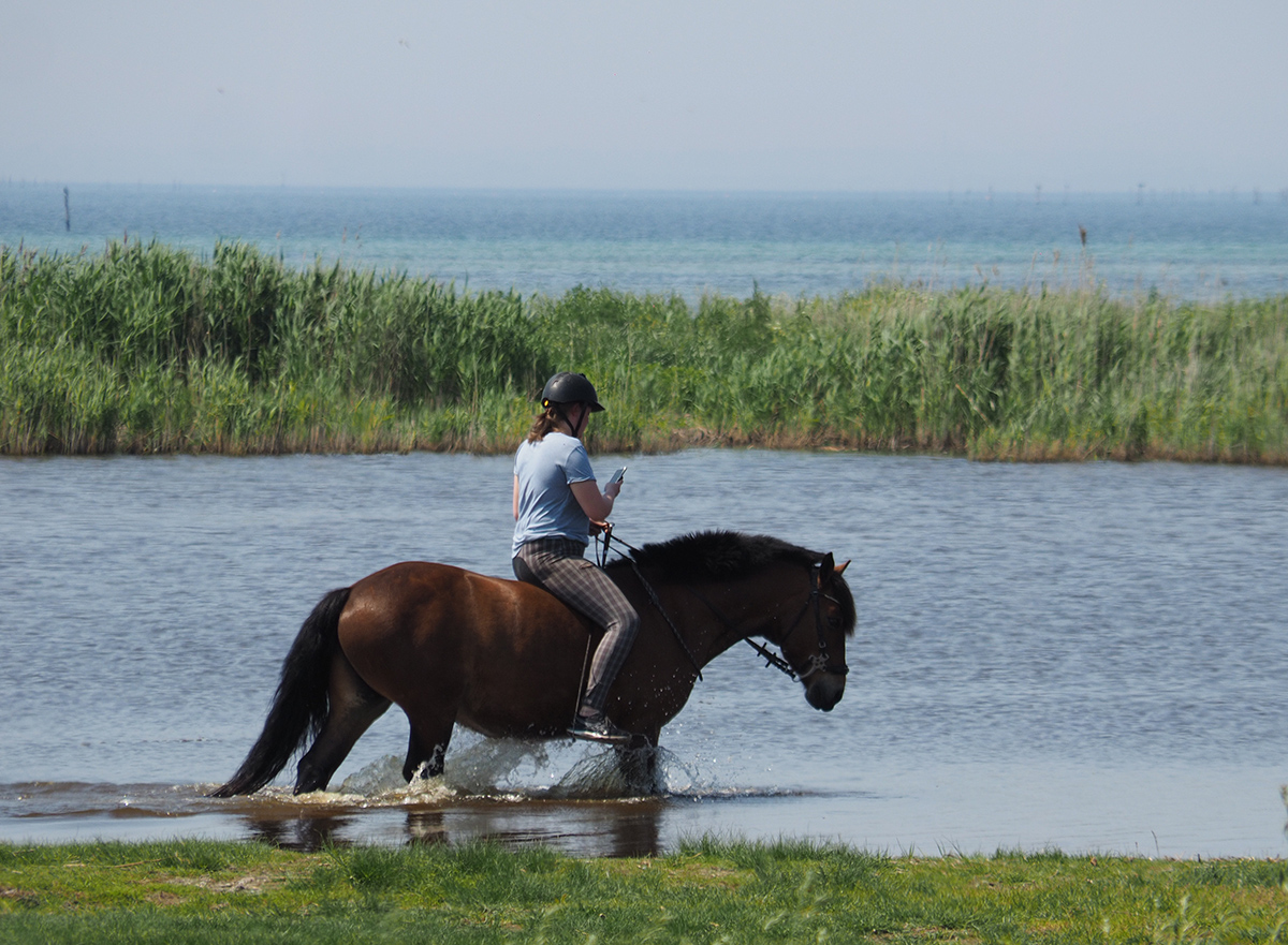 """photo """"Horse with no name"""" tags: nature, portrait, reporting, beach, horse, lake, sea"""