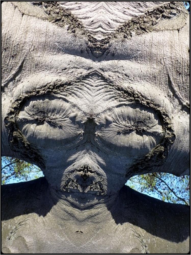 "photo ""the alien bride"" tags: digital art, nature, macro and close-up, bark, close-up, mirror, tree"