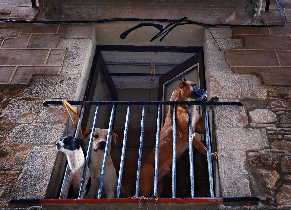 "photo ""***"" tags: street, city, humor, Spain"