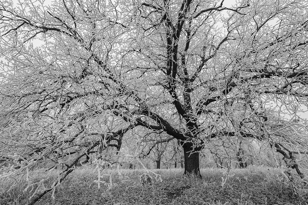 "photo ""***"" tags: landscape, black&white,"