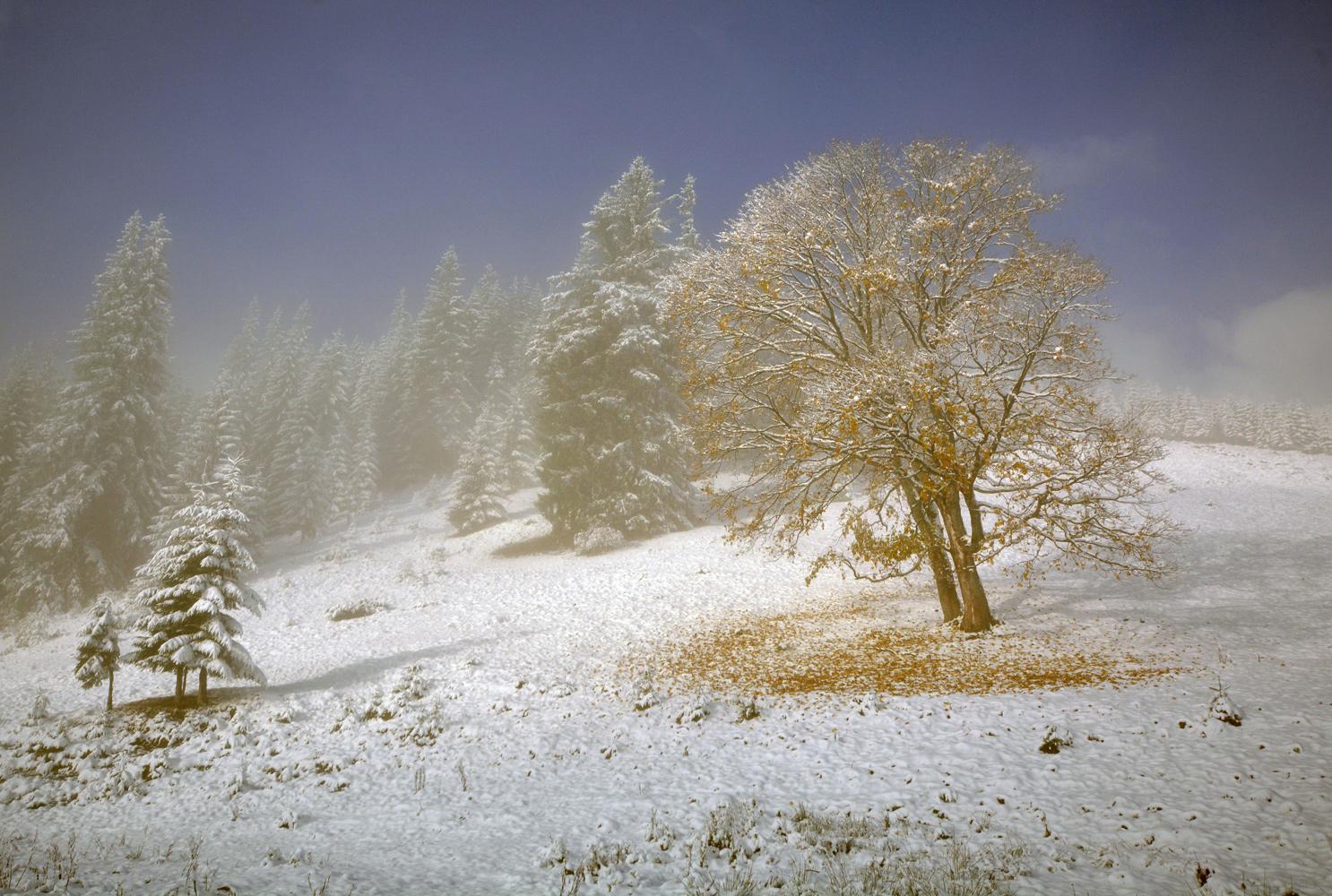 """фото """"Опавшее золото осени."""" метки: пейзаж, Карпаты, Украина, горы, осень, снег"""