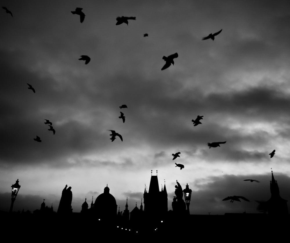 """photo """"Утренние птицы"""" tags: black&white, Prag, Prague, Praha"""