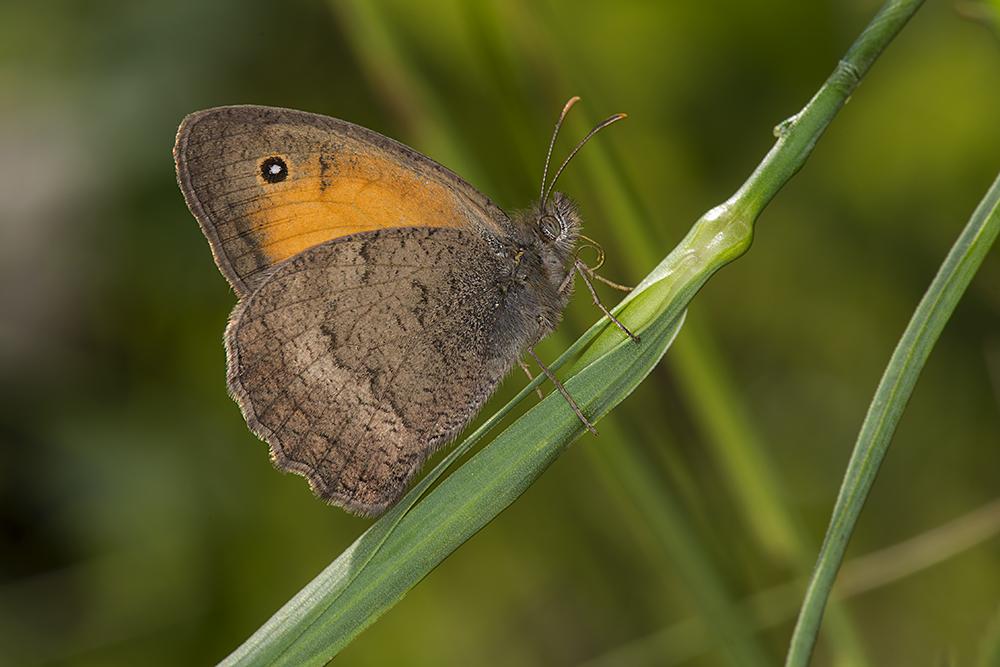 "photo ""***"" tags: macro and close-up, бабочки"