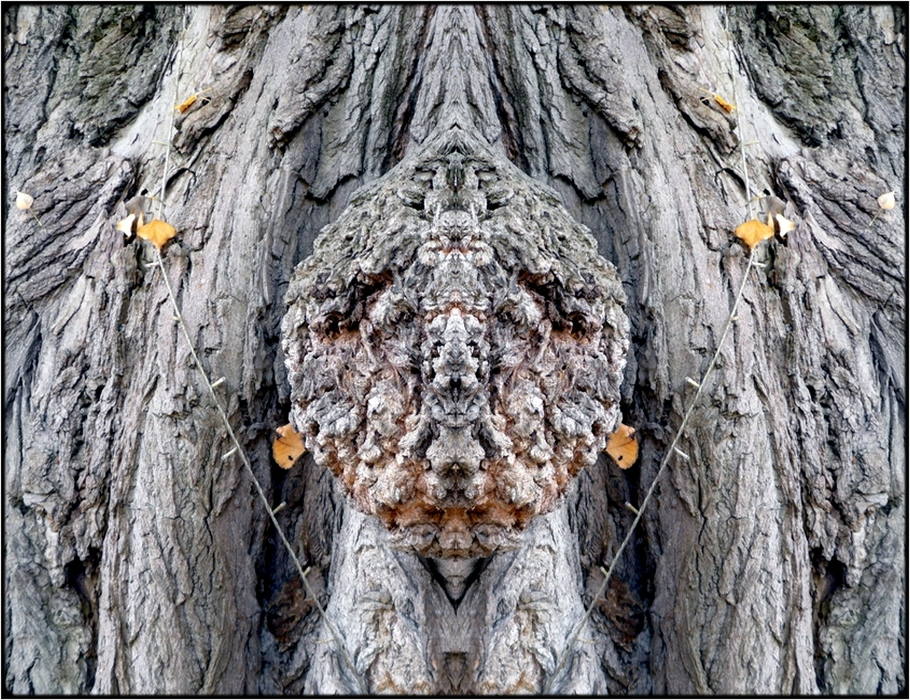 "photo ""wappenkopf - arms' head"" tags: digital art, nature, macro and close-up, bark, close-up, mirror, still, tree"