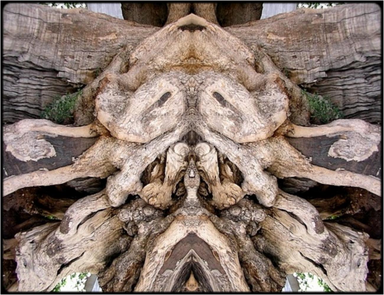 "фото ""ghost tree"" метки: digital art, природа, макро и крупный план, bark, close-up, mirror, sepia, tree"