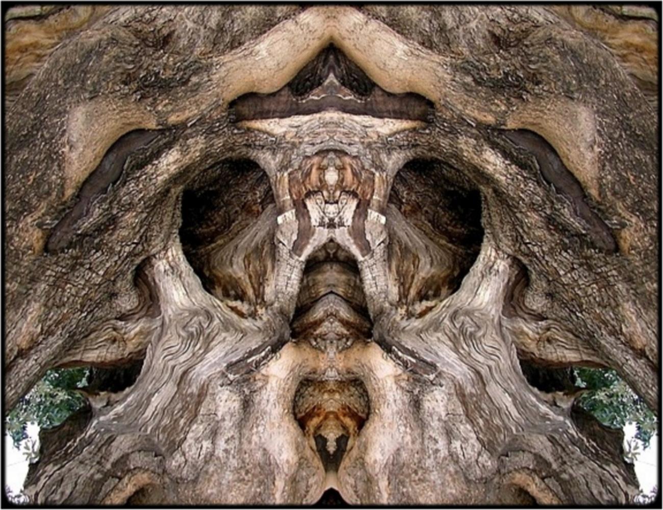 "фото ""ghost tree 3"" метки: digital art, природа, макро и крупный план, bark, close-up, mirror, sepia, still, tree"