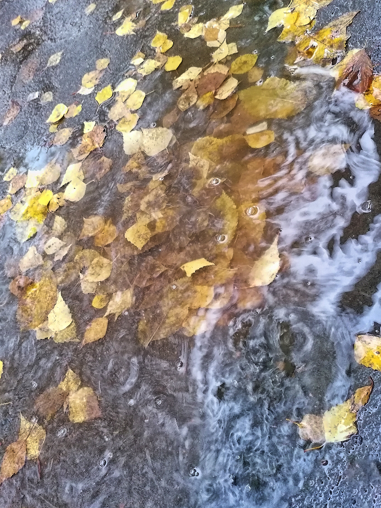 "photo ""***"" tags: abstract, nature, street, autumn, rain, Мобильная фотография, листья, лужа"