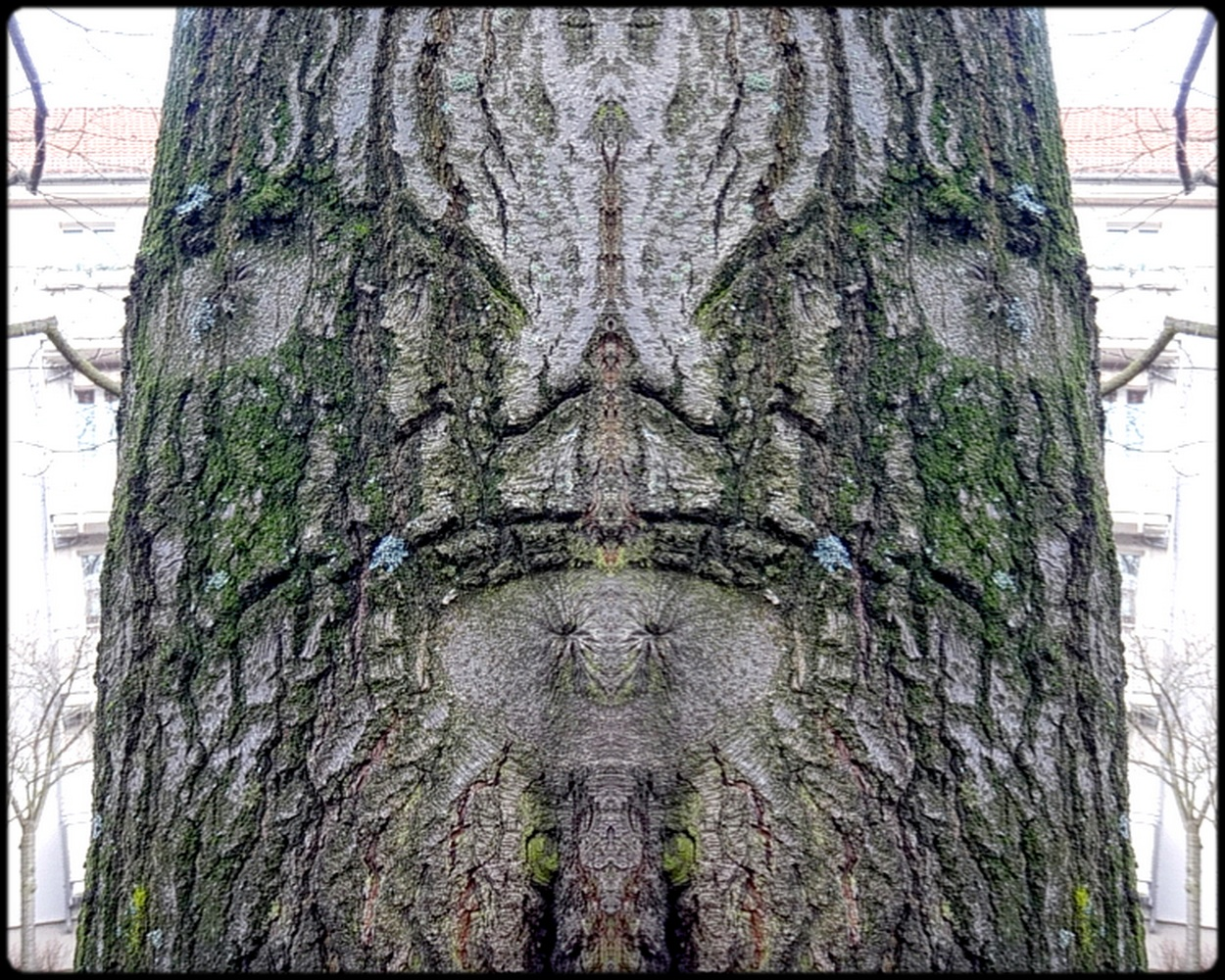"photo ""mister minister"" tags: digital art, nature, macro and close-up, bark, close-up, mirror, tree"