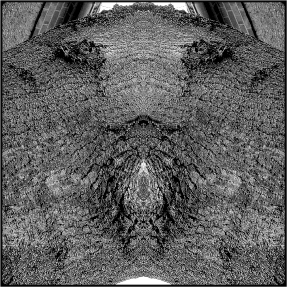 "photo ""the cunt"" tags: digital art, nature, macro and close-up, bark, close-up, still, tree"