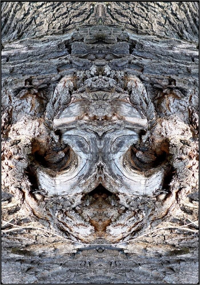 "photo ""demonio"" tags: digital art, macro and close-up, nature, bark, close-up, mirror, tree"