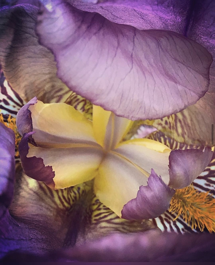 """photo """"Sense of Color_pavel_bondarev_photo"""" tags: nature, macro and close-up, abstract, colour, flowers, флора"""