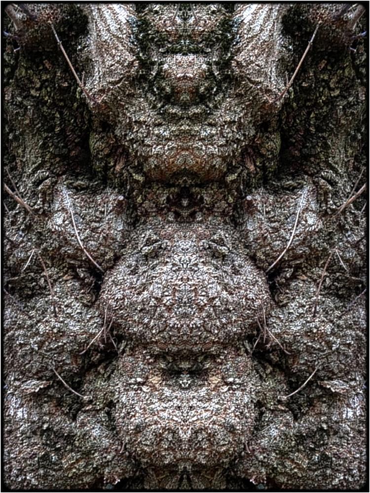 "photo ""the pregnant monster"" tags: digital art, nature, bark, close-up, mirror, tree"