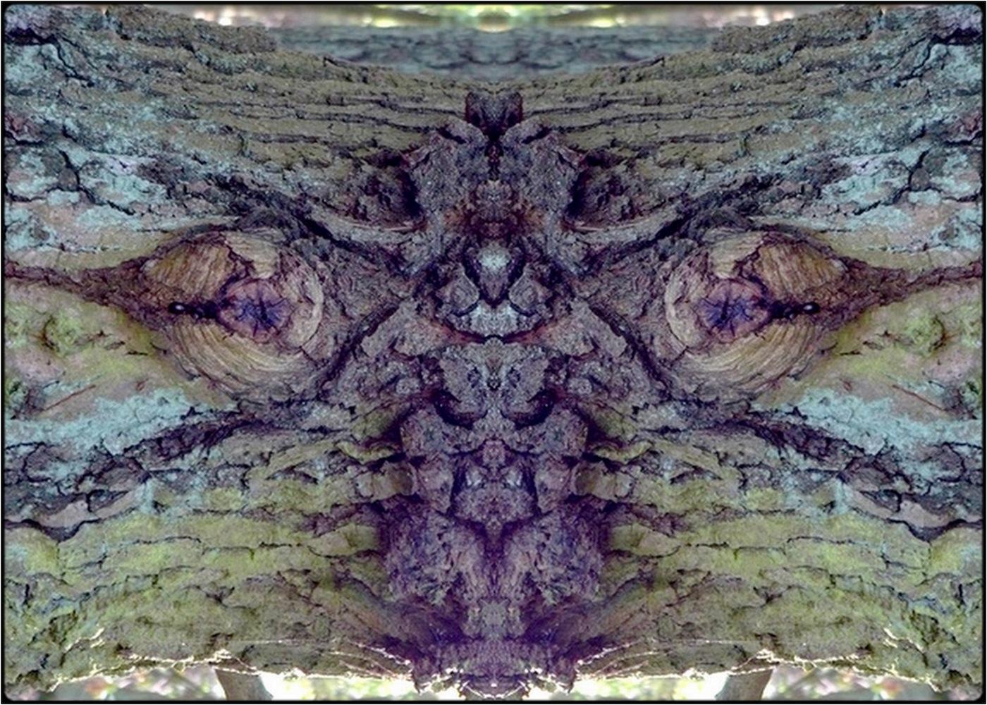 "photo ""a dwarf between the eyes"" tags: digital art, nature, macro and close-up, bark, close-up, mirror, still, tree"
