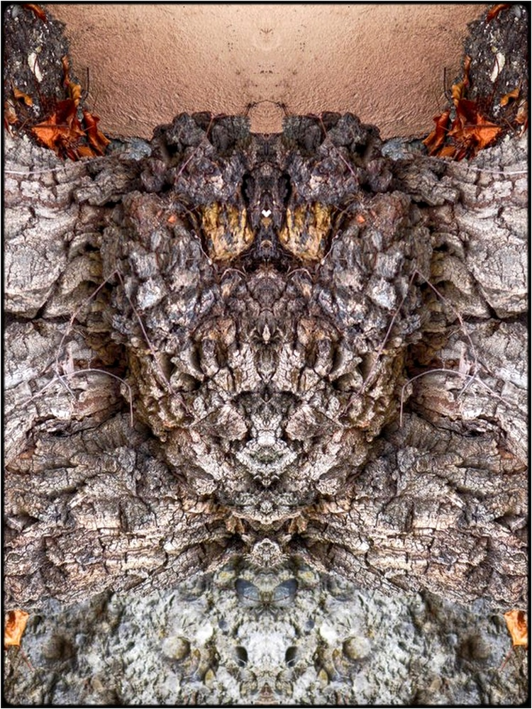 "photo ""golem's head"" tags: digital art, nature, macro and close-up, bark, mirror, still, tree"