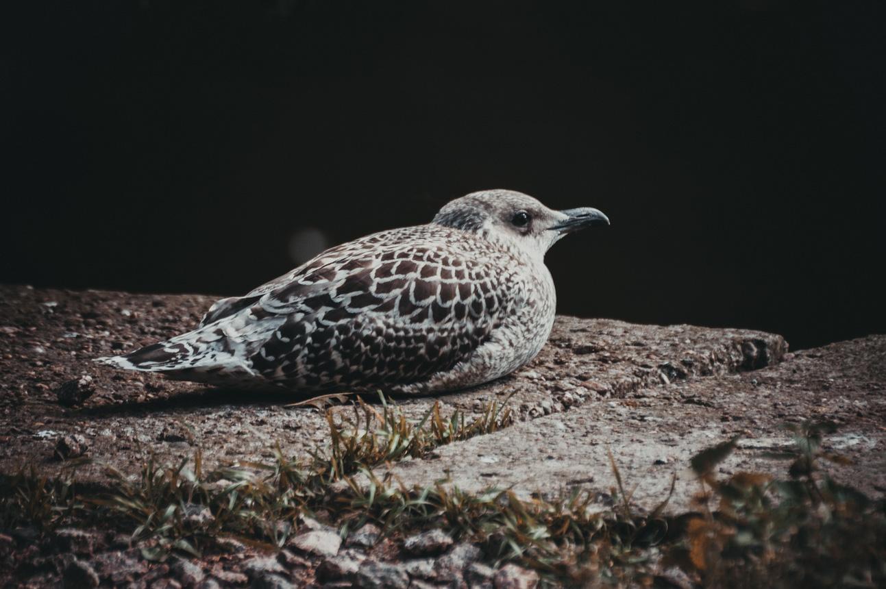 "photo ""lonely bird"" tags: nature, misc., bird, клюв, птицы"