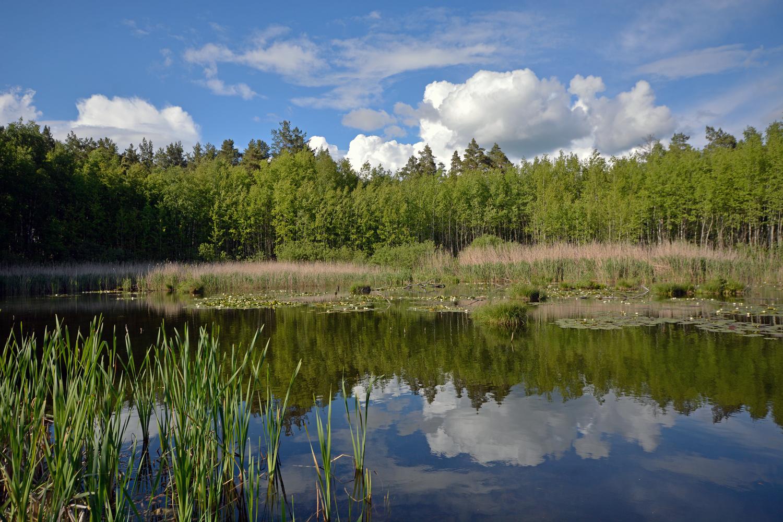"photo ""***"" tags: landscape, forest, lake, spring, лилии"