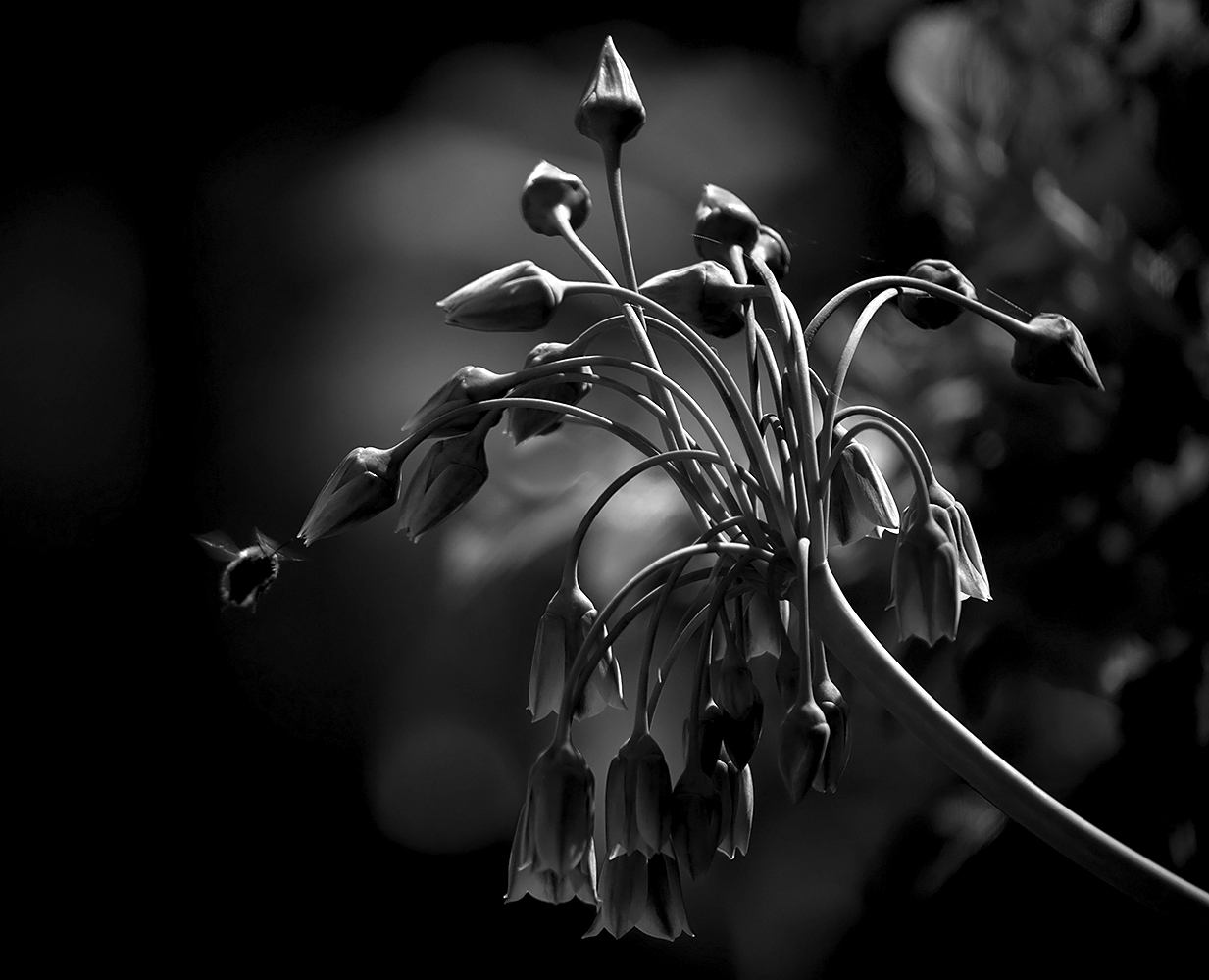 "photo ""***"" tags: nature, macro and close-up, black&white,"