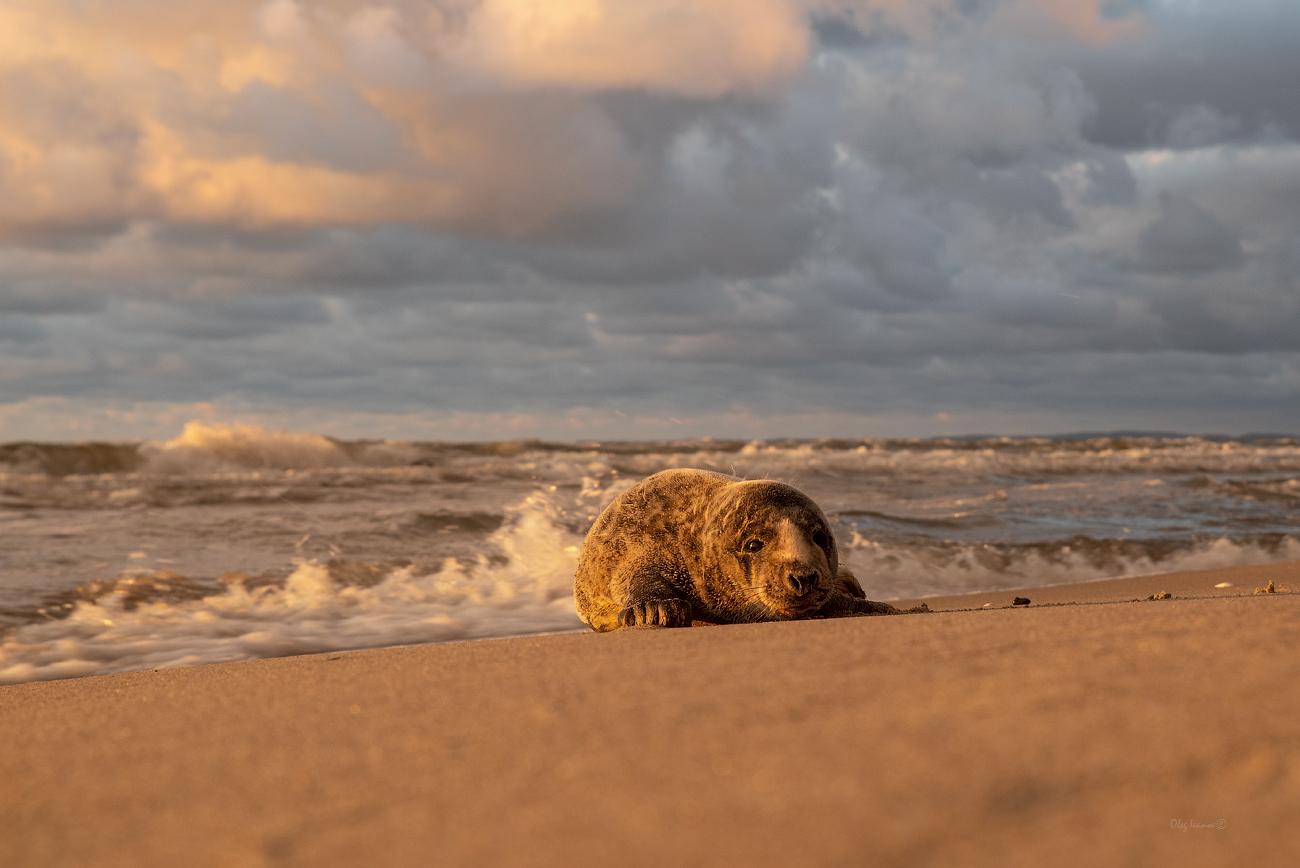 "photo ""***"" tags: nature, misc., Балтика, Калининградская область, животные, тюлень"