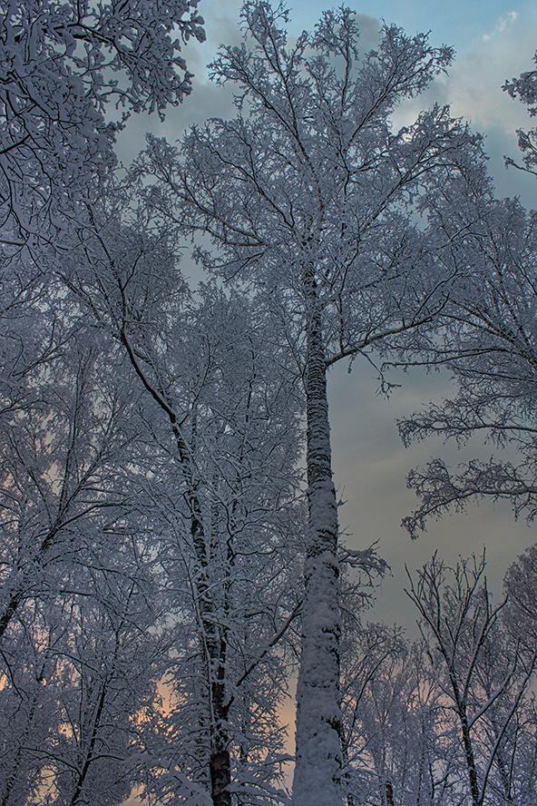 """фото """"Сон в летнюю ночь..."""" метки: природа, фрагмент,"""