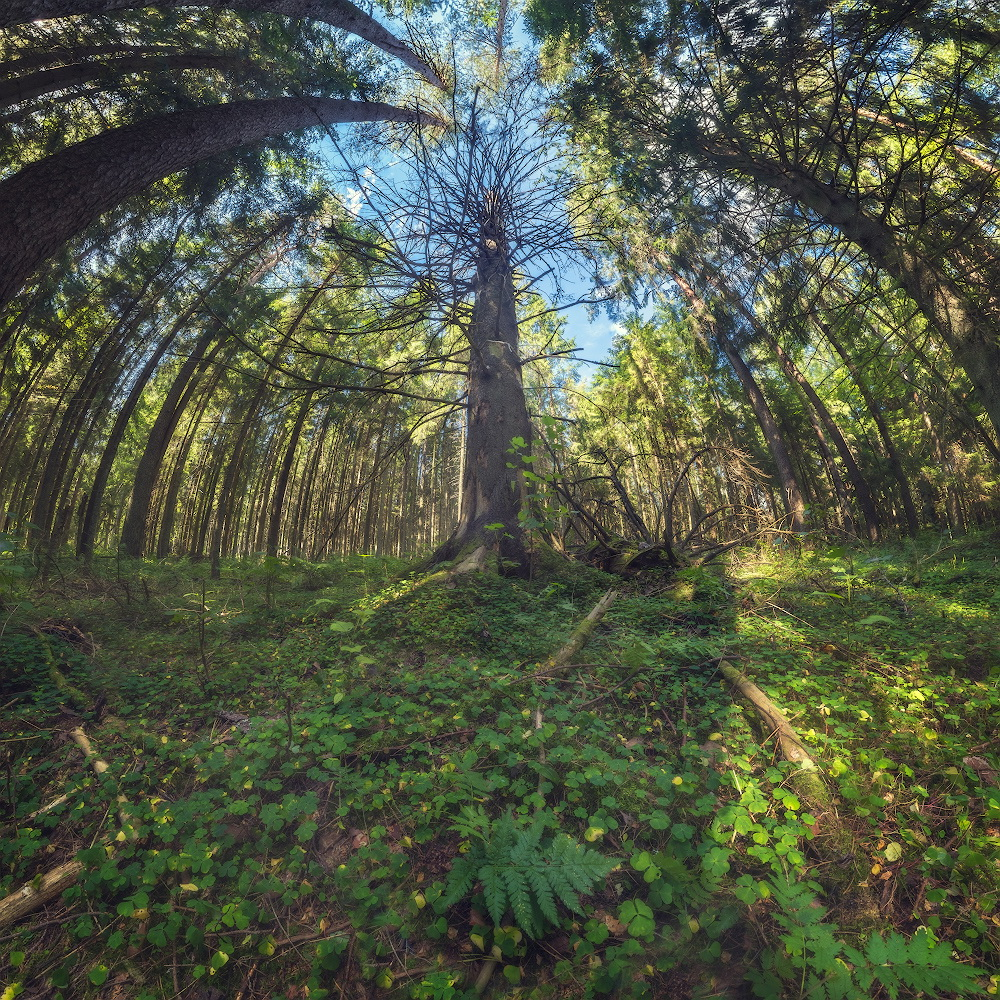 """photo """"***"""" tags: landscape, nature, panoramic, forest"""