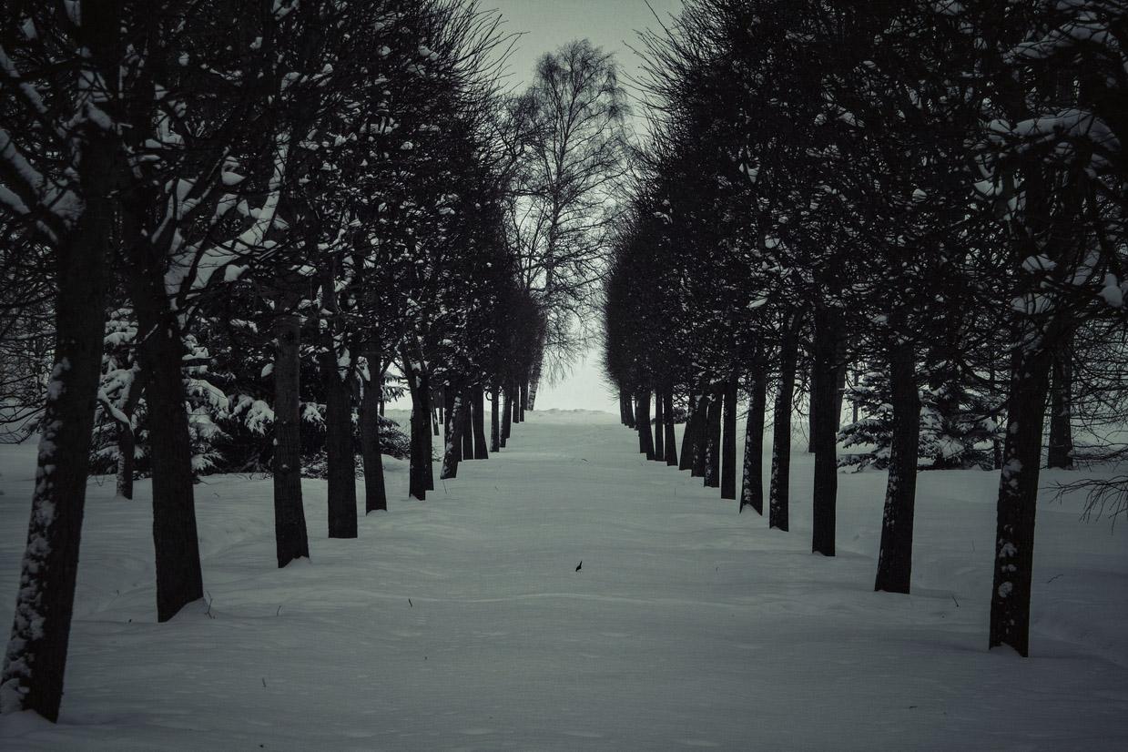 "photo ""winter park"" tags: landscape, black&white, misc., park, snow, tree, winter, Петергоф, деревья"