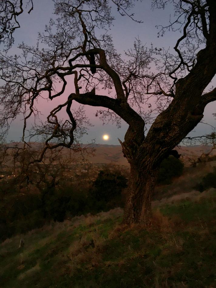 """photo """"Первый вечер нового 2021 года."""" tags: landscape, Первый день"""