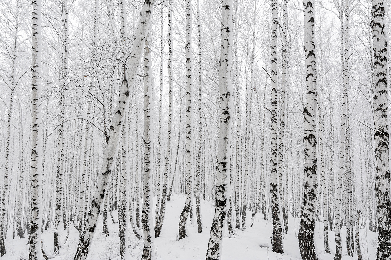 "photo ""***"" tags: nature, black&white, forest, snow, winter, пасмурно"