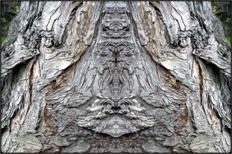 "photo ""raven-ghost"" tags: digital art, nature, macro and close-up, bark, close-up, mirror, tree"
