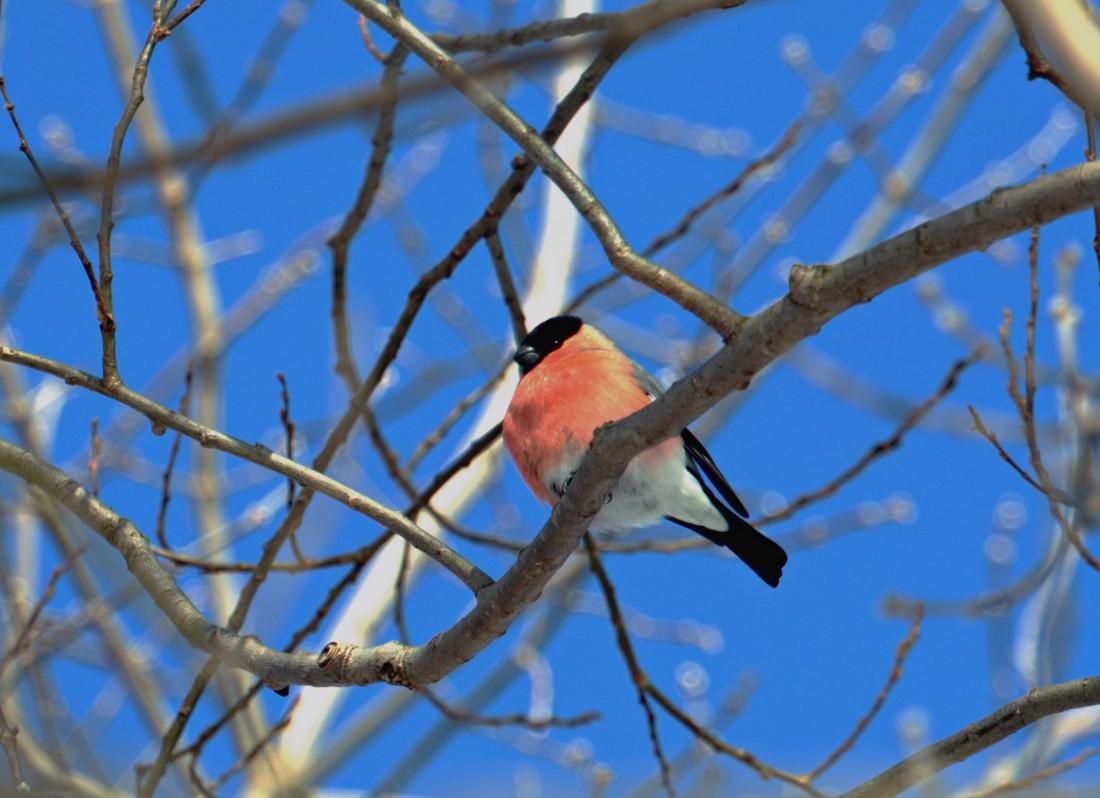 """фото """"Зимние птицы"""" метки: природа,"""