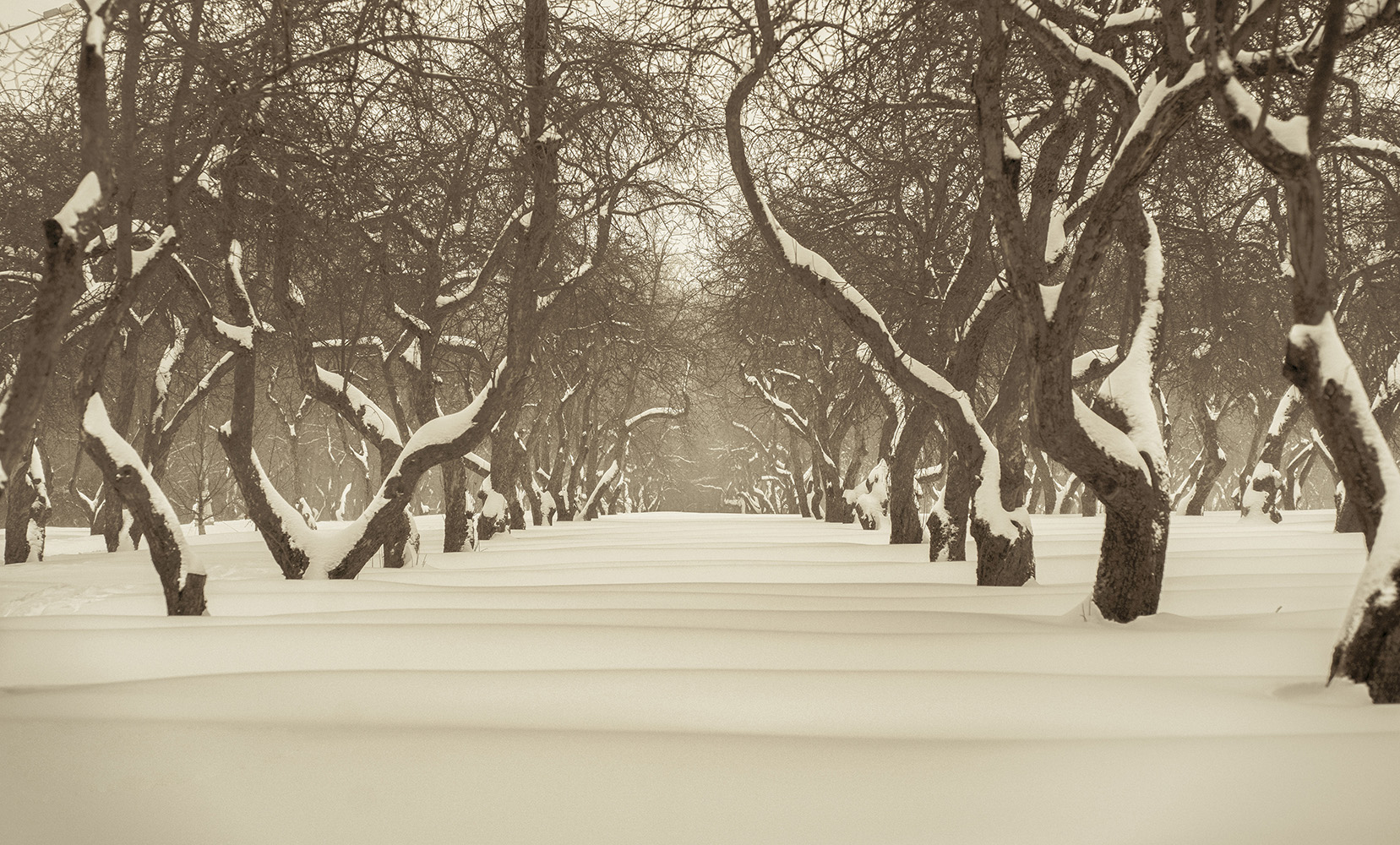 "photo ""***"" tags: landscape, nature, travel, forest, park, snow, winter, красота, ландшафт"