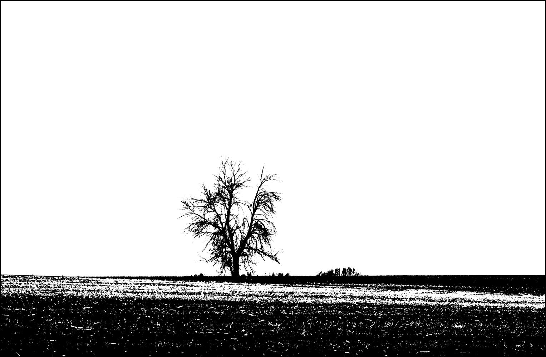 "photo ""***"" tags: landscape, field, spring, tree, чернозем"