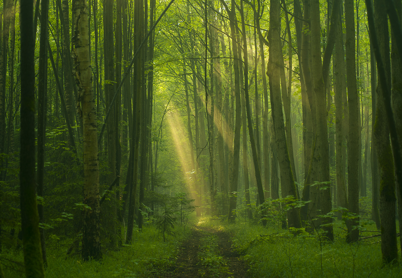 "photo ""***"" tags: landscape, travel, nature, colour, forest, light, park, sky, красота, ландшафт, фото"