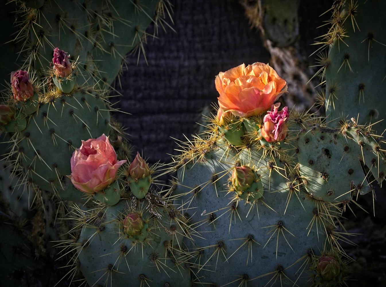 "photo ""Кактусы тоже любят весной."" tags: macro and close-up, Cactus, spring"
