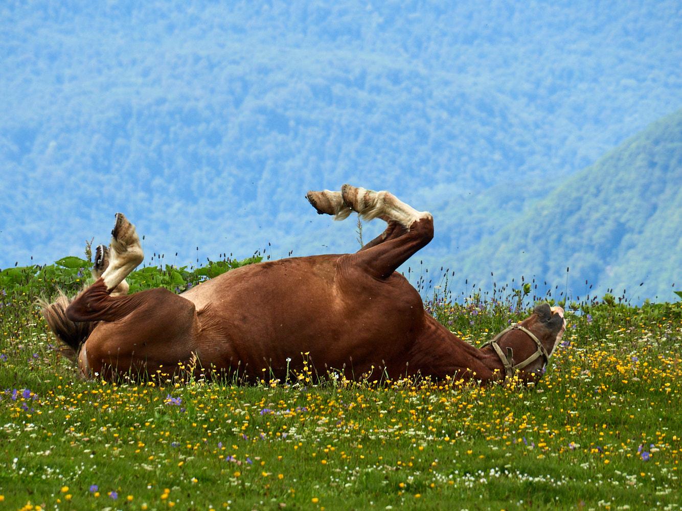 "photo ""***"" tags: nature, humor,"