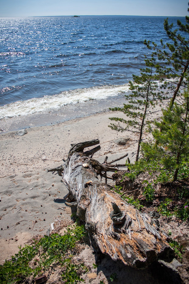 """photo """"after the storm"""" tags: landscape, misc., nature, Karelia, beach, lake, tree, water, песок"""