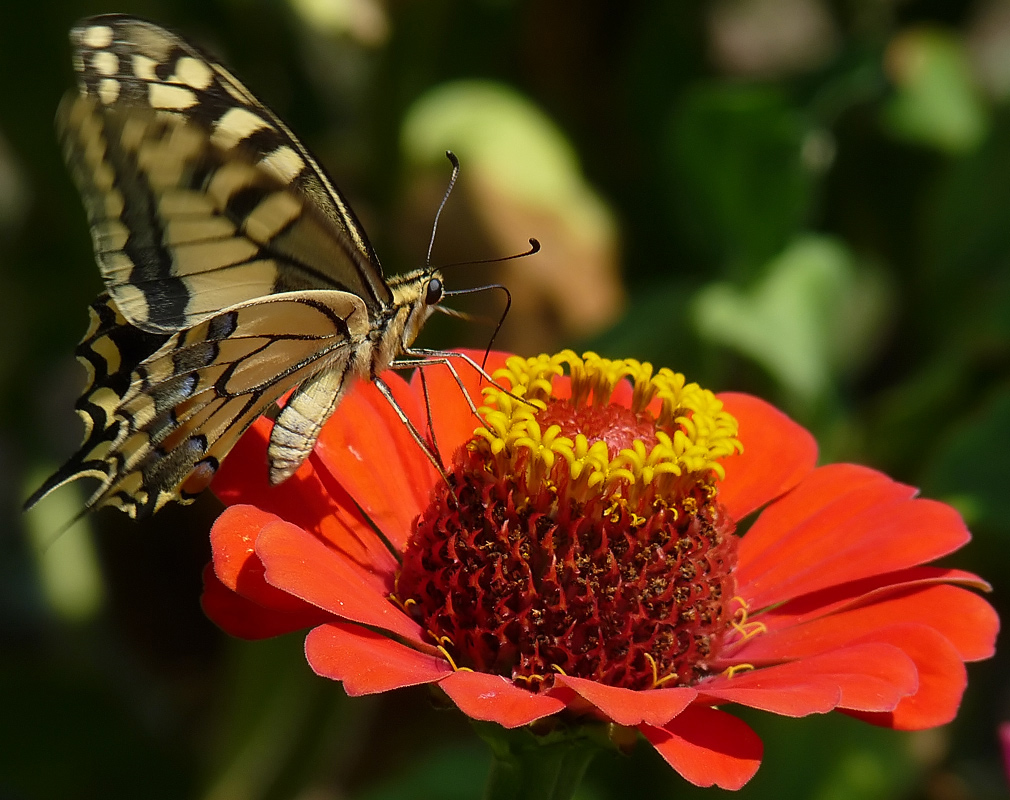 """photo """"***"""" tags: macro and close-up, insect"""