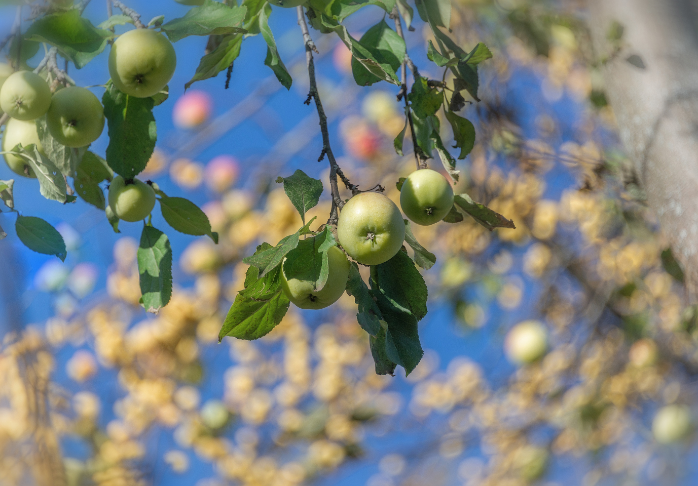 """photo """"***"""" tags: misc., nature, fragment,"""