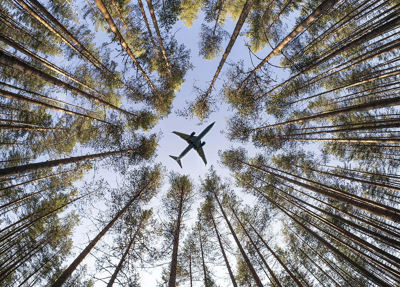 "фото ""В лесу."" метки: путешествия, фотомонтаж,"